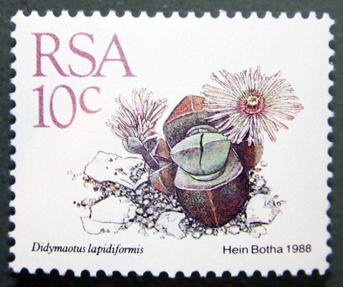 Didymaotus lapidiformis, South Africa, 1988