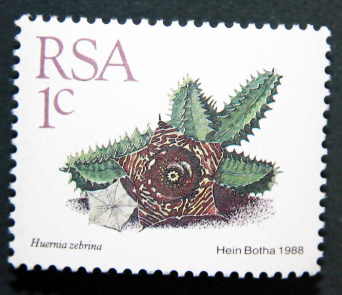 Succulents on Stamps: Huernia zebrina, South Africa, 1988