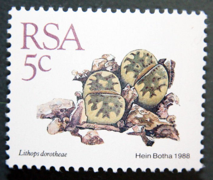 Succulents on Stamps: Lithops dorotheae, South Africa, 1988