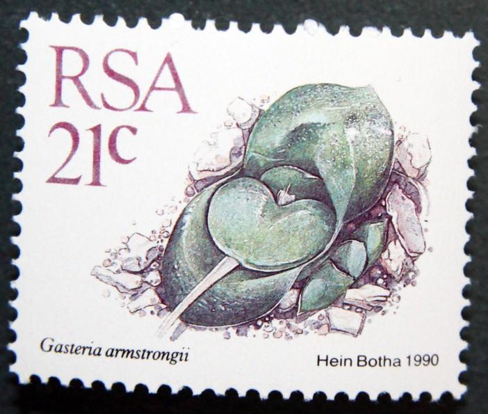 Gasteria nitida var. armstrongii, South Africa, 1990