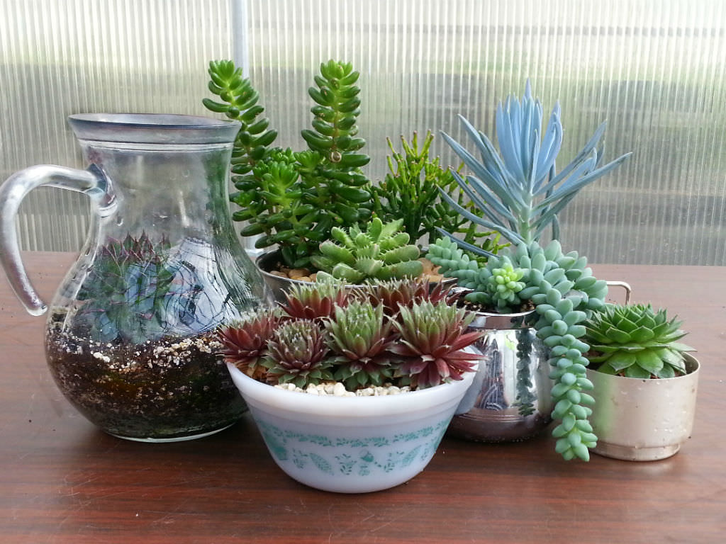 Indoor Plants Arrangement Ideas How To Identify Your Succulent Plant World Of Succulents