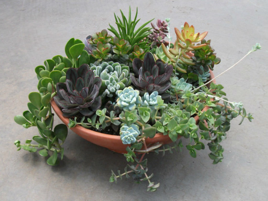 Turtle Planter Succulents The Perfect Plants For Forgetful Gardeners